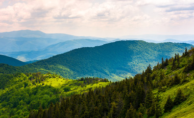 forested hills of Carpathian mountains. beautiful scenery in summer
