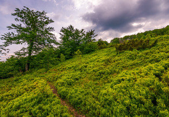 path uphill the grassy hillside in to the forest. lovely summer scenery on a cloudy afternoon