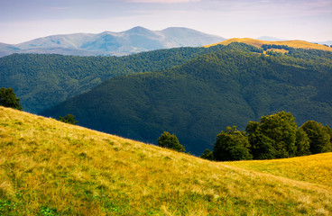 grassy meadow on hillside of Carpathians. beautiful summer landscape with Svydovets mountain ridge in the distance