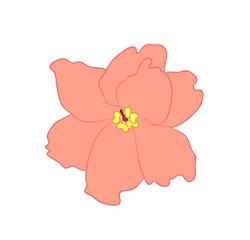 Vector illustration of Saintpaulia flower