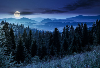 spruce forest in mountains at night in full moon light. lovely summer landscape