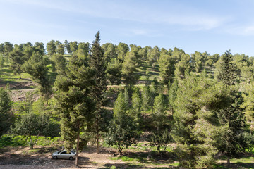 Visiting Lahav Forest in northern Negev