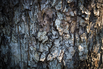 Texture of bark of an apple tree for backgrounds.