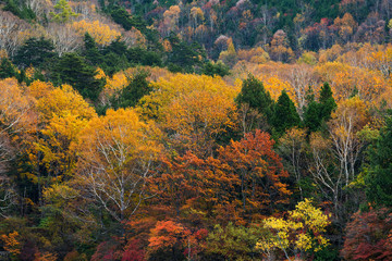Beautiful Autumn forest with colourful tree and plant