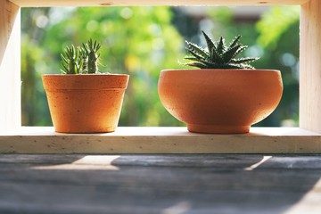 Small succulent pot plants decorative on wood window with morning warm light