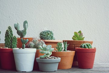 Various little succulent pot plants collection on vintage wood table with free space background