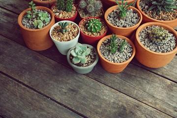 Various little succulent pot plants collection on vintage wood table with free space background, kalanchoe, dorestenia, echeveria, cactus, haworthia