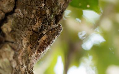 closeup cicada