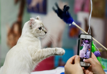 Visitors take photos and play with an American Curl cat during a local cat exhibition in Almaty