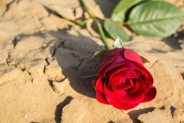rose, flower, red, love, valentine, beauty, nature, romance