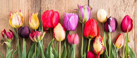 Foto op Plexiglas Tulp multicolored tulips on a wooden background, banner, old boards, spring flowers, tulips on the boards