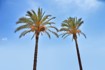 shot of palm trees