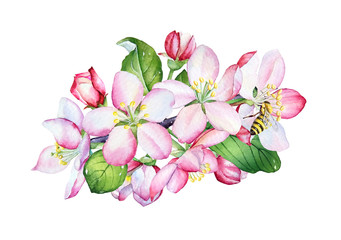 Watercolor apple flowers and green leaves on white background.