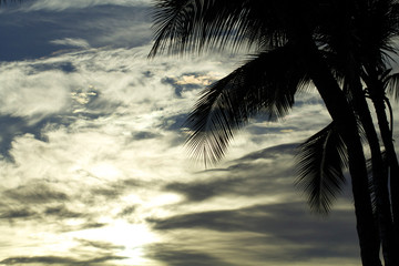 Waikiki Beach Palm Tree and Clouds