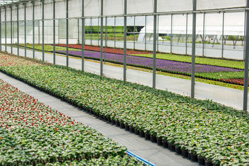 Greenhouses for growing flowers. Floriculture industry