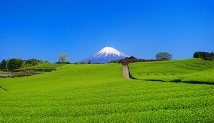 富士市今宮の新緑の茶畑と青空の富士山 2018/04/20