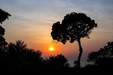 Sunset sky in blue and orange. Dark tree silhouette on sky background.
