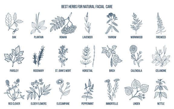 Best medicinal herbs for natural facial care