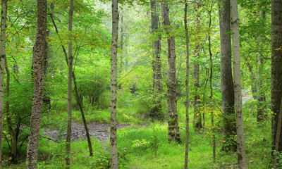 A Summer hike performing an invasive plant species survey,through a peaceful lush Northeast forest.