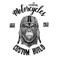 Gorilla, monkey, ape Biker, motorcycle animal. Hand drawn image for tattoo, emblem, badge, logo, patch, t-shirt