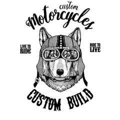 Wolf Dog Biker, motorcycle animal. Hand drawn image for tattoo, emblem, badge, logo, patch, t-shirt