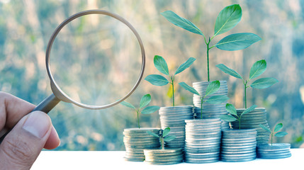 Magnifier searching investment growing money of tree leaf infestation