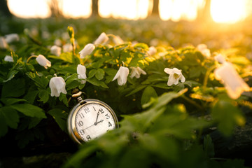 Golden pocket watch in a forest with anemone flowers