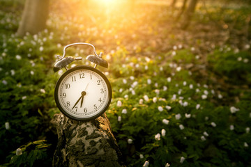 Alarm clock in the sunrise over a forest