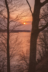 Golden sunrise between the trees