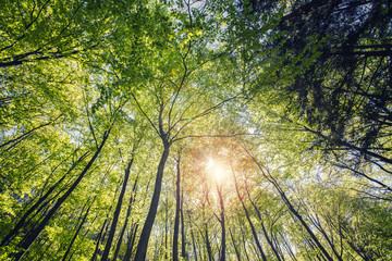 sun rays in green forest