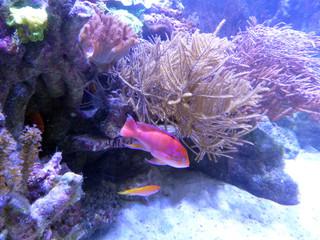 Fisch, Tier schwimmen in einen farbenfrohen Aquarium