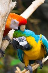 Vibrant Macaws