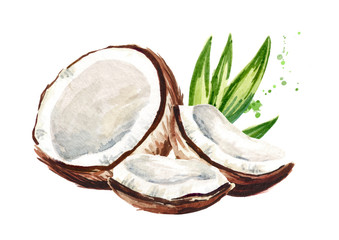 Cracked coconut. Watercolor hand drawn illustration, isolated on white background