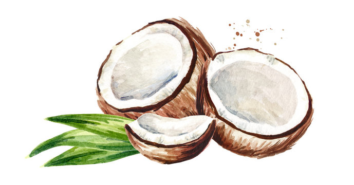 Cracked coconut with green leaves. Watercolor hand drawn illustration, isolated on white background
