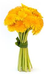 gelbe Löwenzahn Blumenstrauss mit weißem Hintergrund