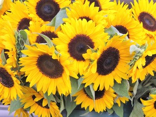 A bundle of fresh picked sunflowers