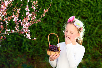 Little girl with basket of the first  fruits during the Jewish holiday, Shavuot in Israel. Happy cute kid eating grape.