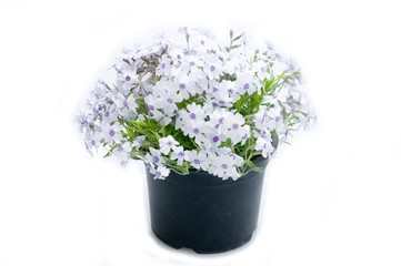 flowers in plastic pots over white