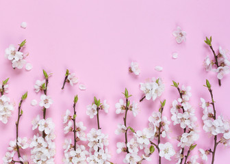Pattern made of white spring flowers on a pink background. Composition of flowers. Top view, space for copy, square, flat lay.