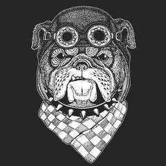 Bulldog Hand drawn vintage image for t-shirt, tattoo, emblem, badge, logo, patch Cool animal wearing aviator, motorcycle, biker helmet.