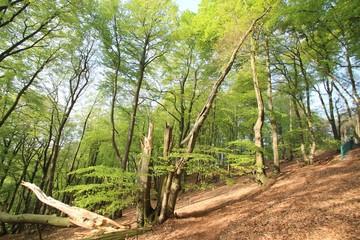 Teutoburger Wald (Bielefeld)