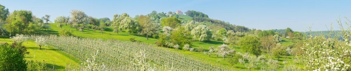 Panorama blühende Landschaft im Frühling