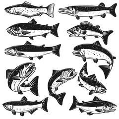 Big set of fish illustrations. Pike, salmon, trout, perch. Design elements for fishing logo, label, emblem, sign.