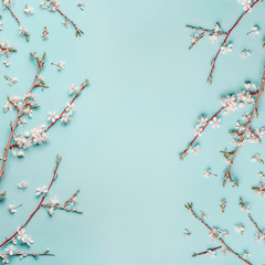 Wall Mural - Springtime background with cherry blossom twigs on blue desktop, top view, frame, flat lay