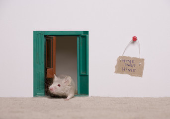 A home ownership concept with a mouse home.