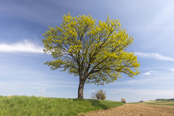 View of a tree in spring landscape in Germany