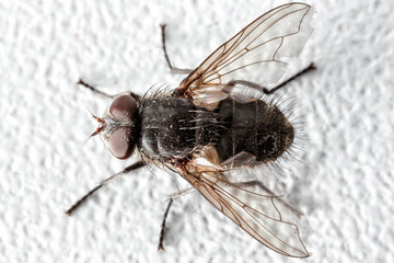 Fly close-up.