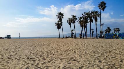 Venice Beach Palm Trees