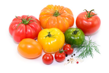 Ernte Tomaten