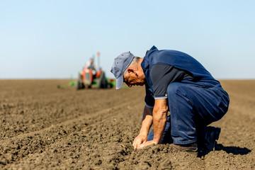 Senior farmer in field examining sowing.